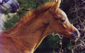 Picture of a horse named Kariq